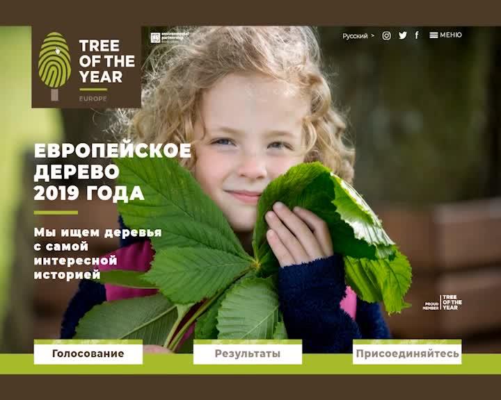 Костромичи могут поддержать абрамцевский дуб в престижном международном экологическом конкурсе