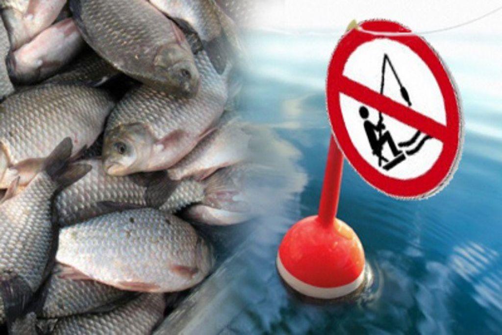 В Костромской области вводится запрет на ловлю рыбы