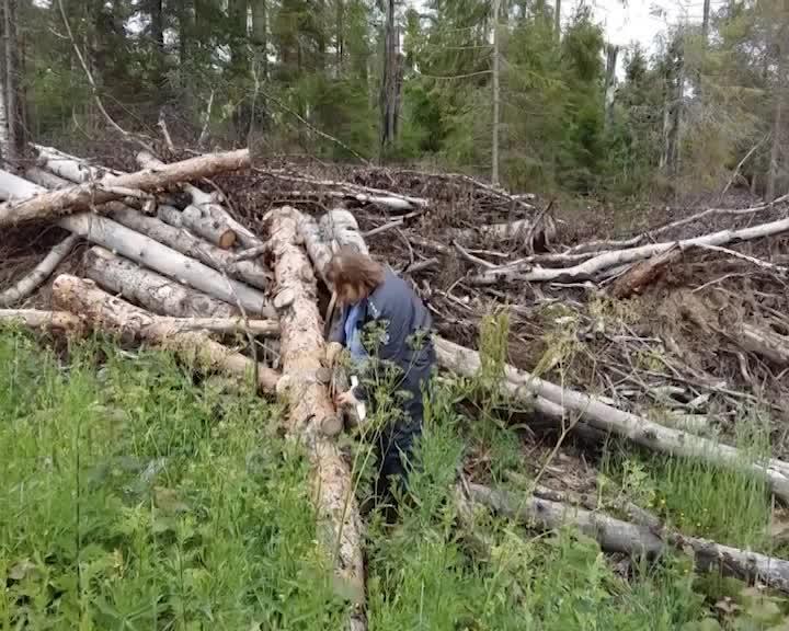 В Костромской области начали проверку заготовителей древесины