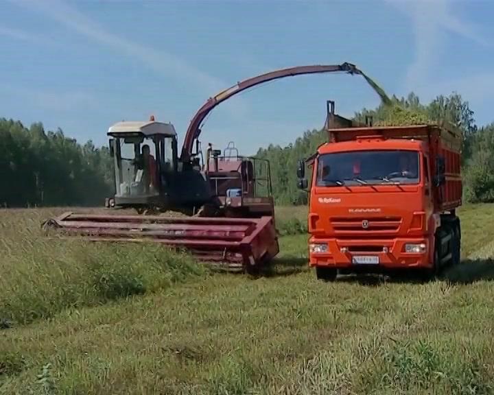 В Костромской области используют каждый погожий день для заготовки кормов