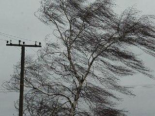 В Костромской области метеорологи прогнозируют сильное усиление ветра