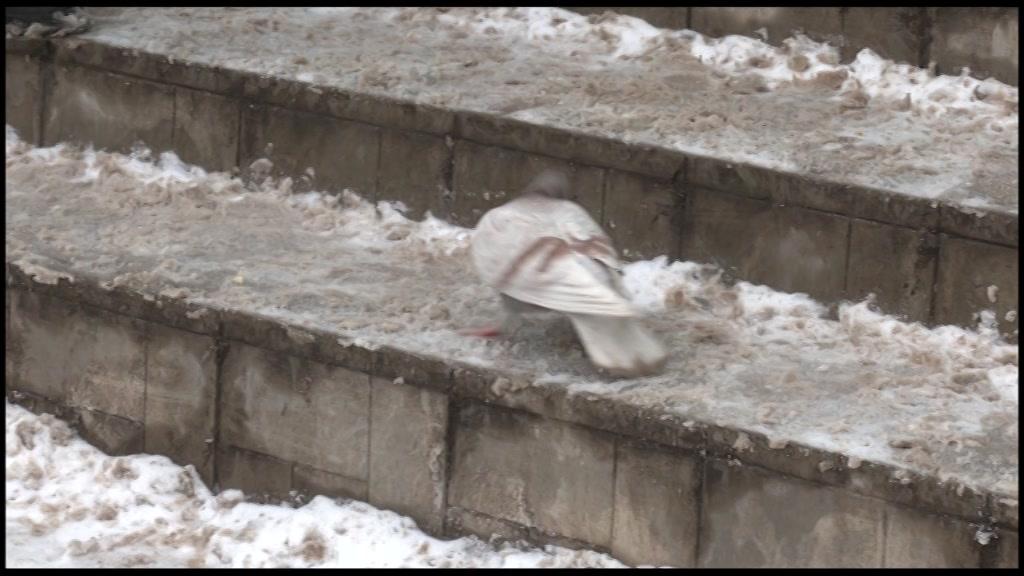 В Костроме проверили, как организована уборка снега и наледи