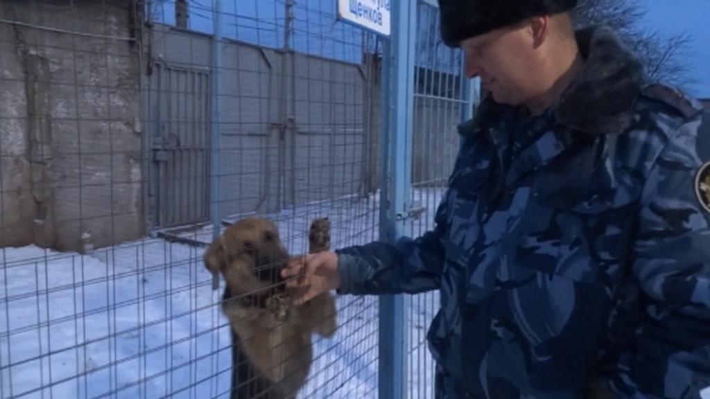 В кинологической службе Управления ФСИН по Костромской области пополнение