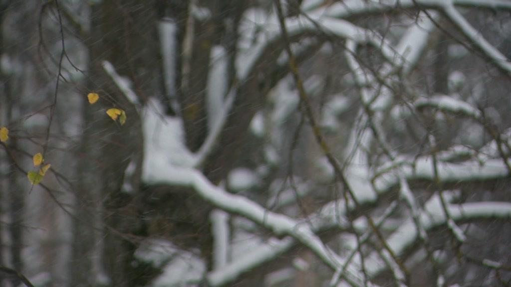 В Костромской области ожидаются снег и дождь