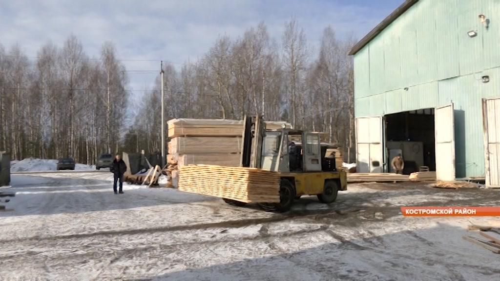 В Костроме собираются бороться с усачами и короедами