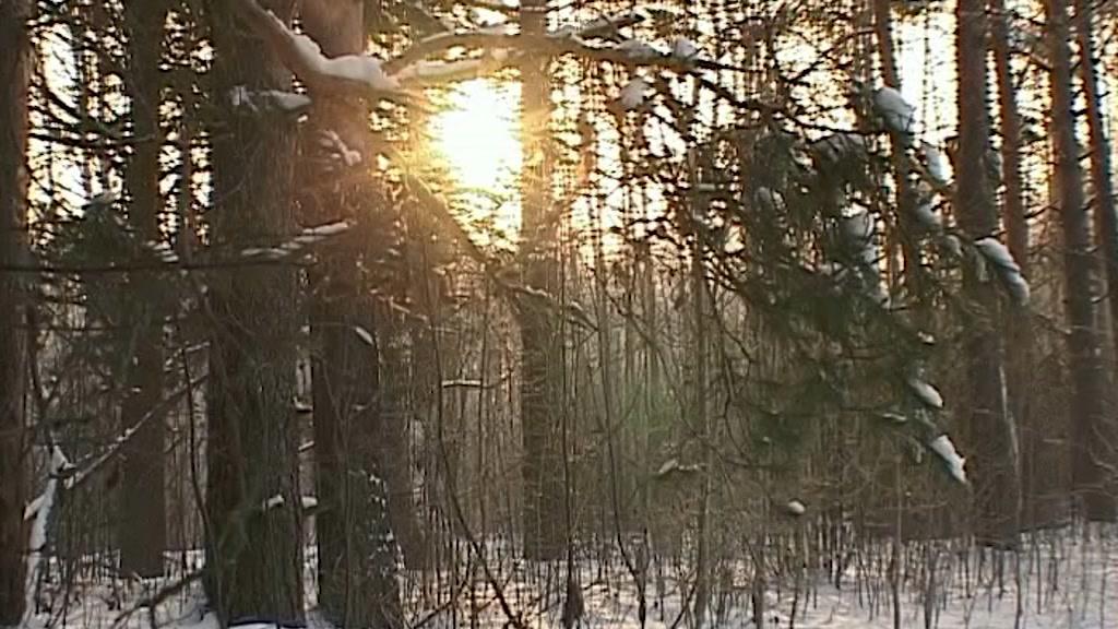 В Костромской области по горячим следам задержали браконьера