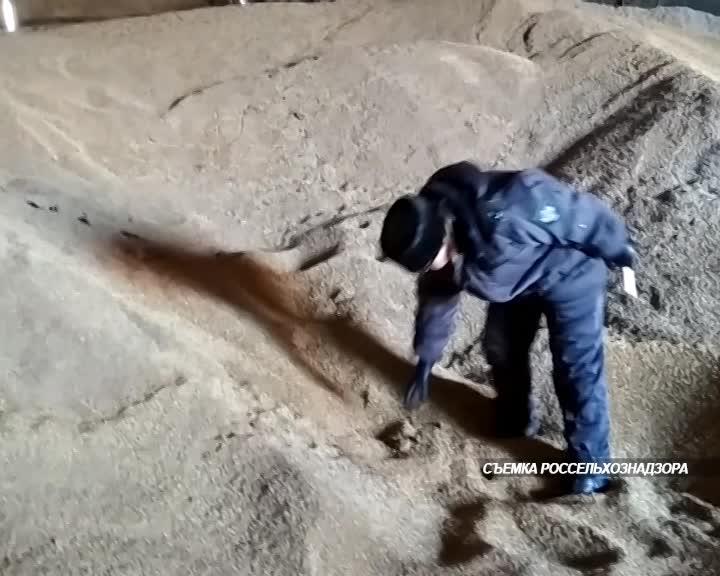 Более пятисот тонн зерна забраковали специалисты Костромского областного Управления Россельхознадзора