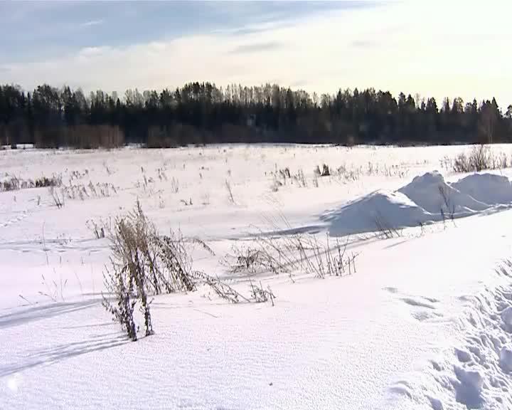В Костромской области у собственника изъяли земельный участок из-за невыполнение обязательств