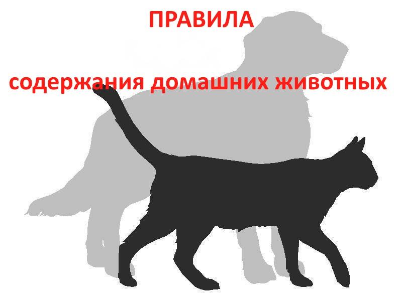 В Костроме проверяют соблюдение правил содержания домашних животных