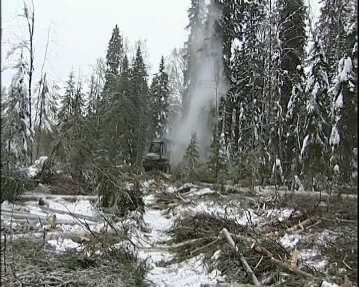 В Костромской области площадь лесных участков, переданных под лесозаготовку, увеличилась на 40%