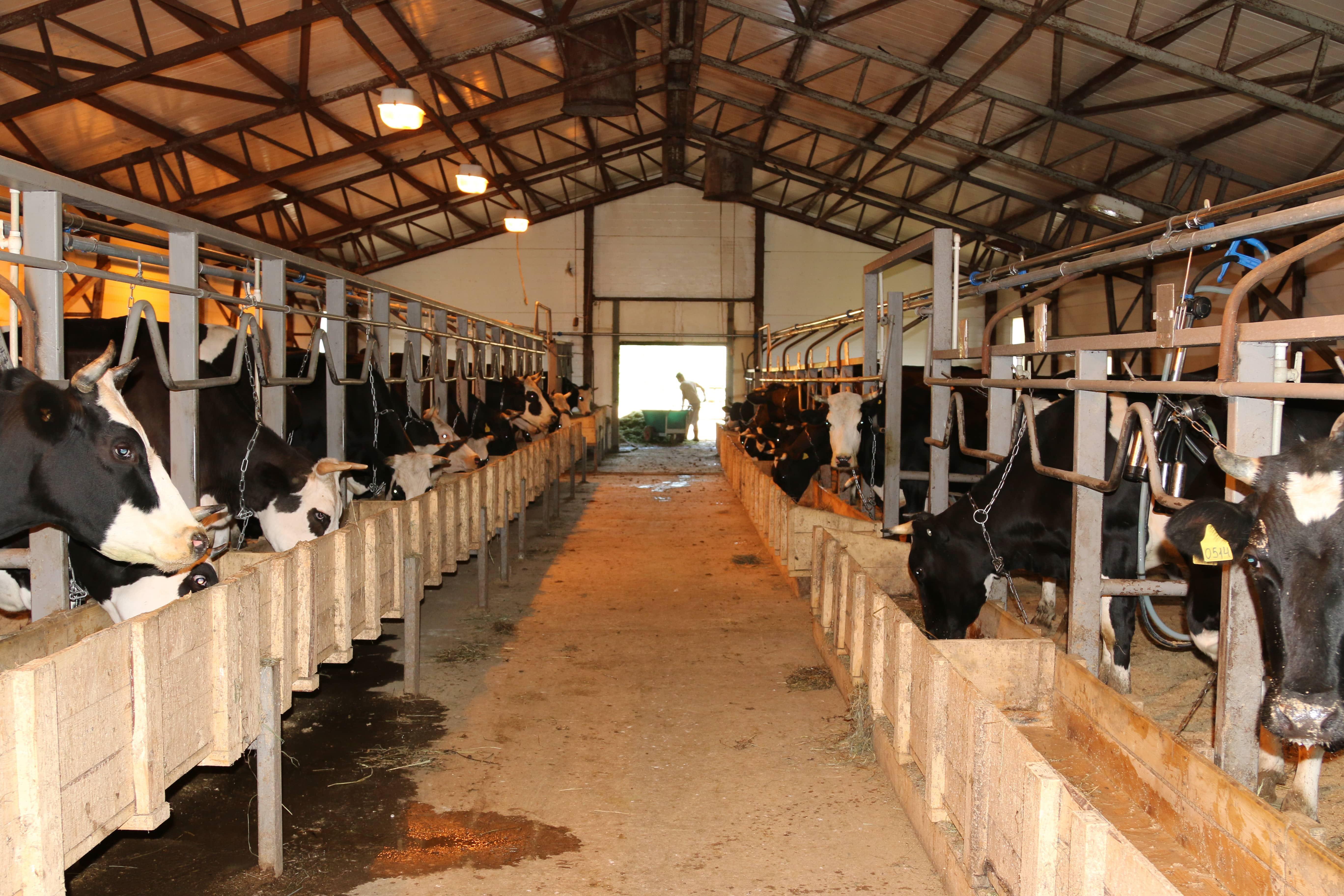 В Костромской области объявлен конкурс грантов для сельхозпредприятий