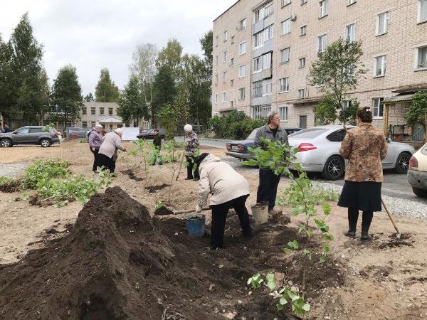 В городе Шарье Костромской области планируют высадить 12 тысяч деревьев
