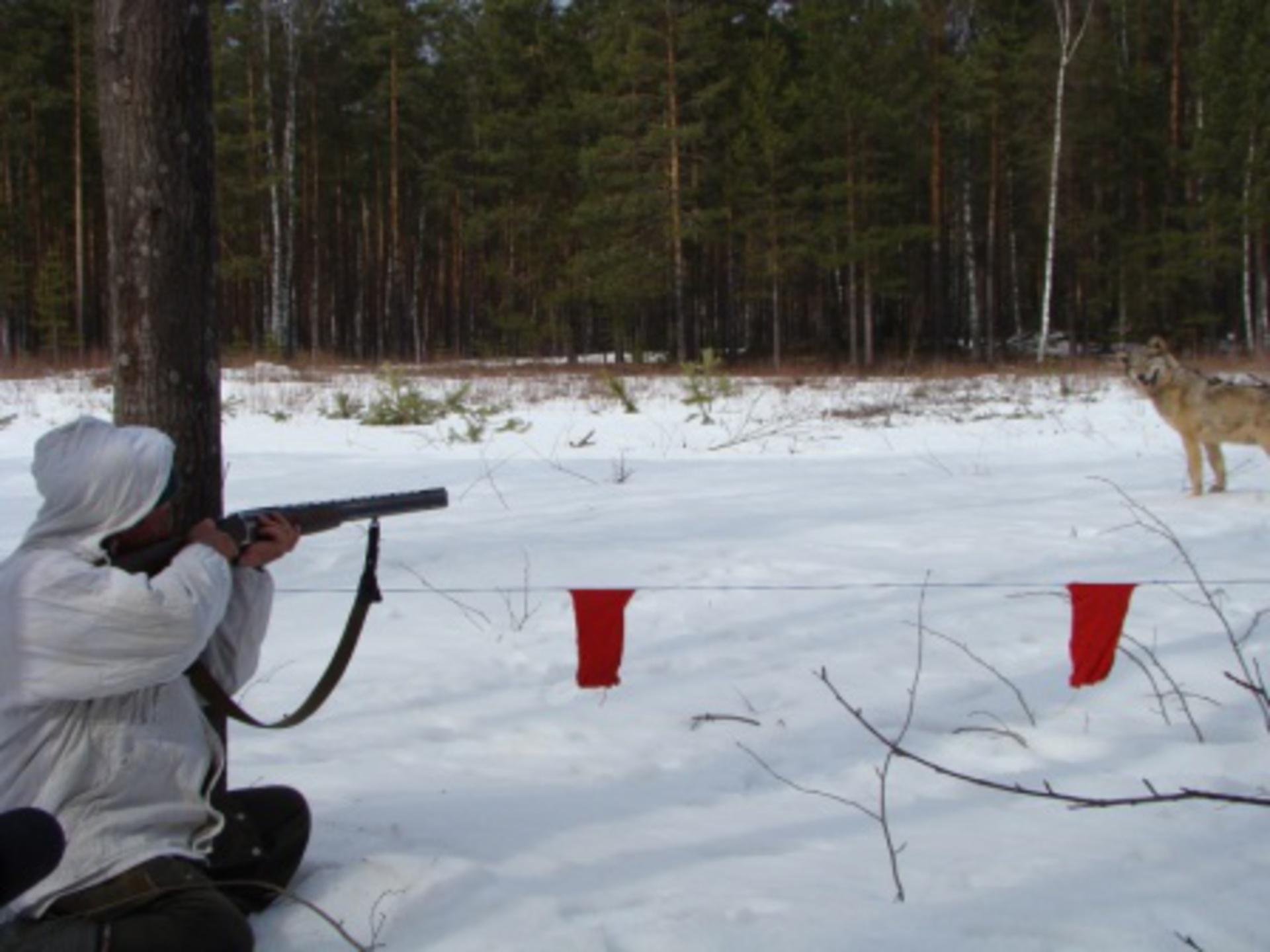 В Костромской области утвердили зоны, где запрещена охота