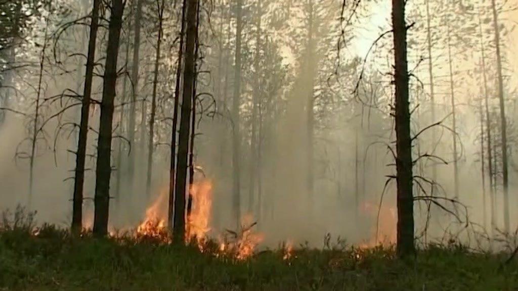 В костромских лесах усилят контроль за пожарной безопасностью