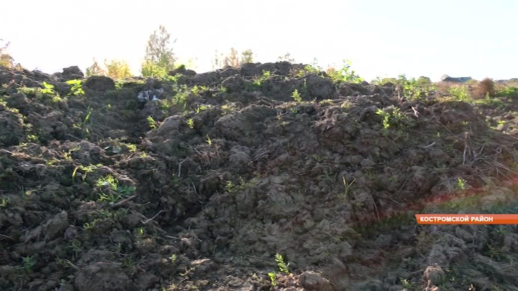 Костромской фермер завалил деревню навозом