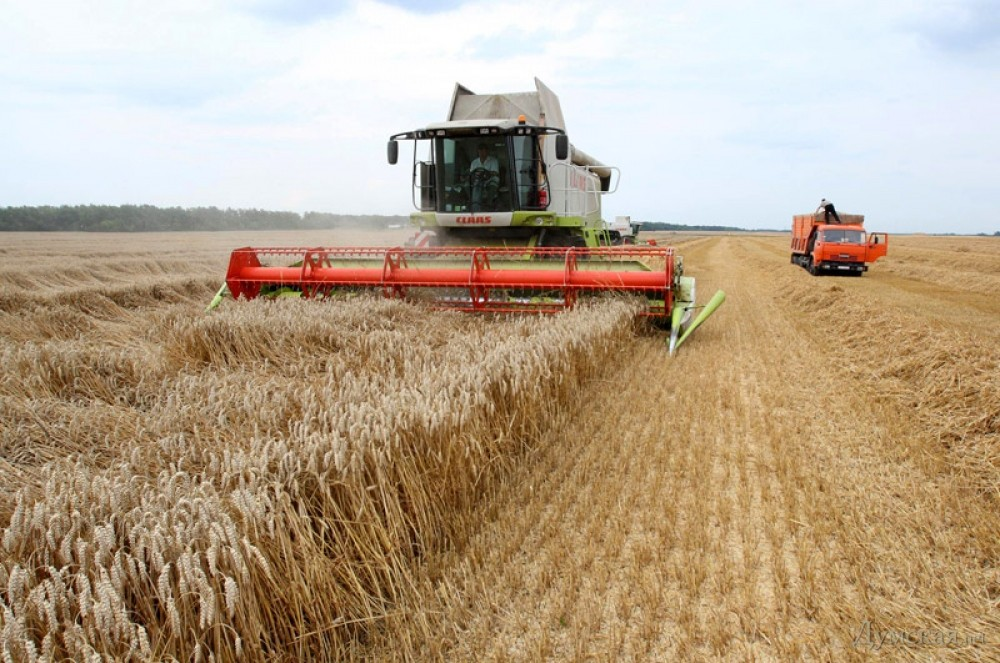 Костромское зерно отправилось в закрома