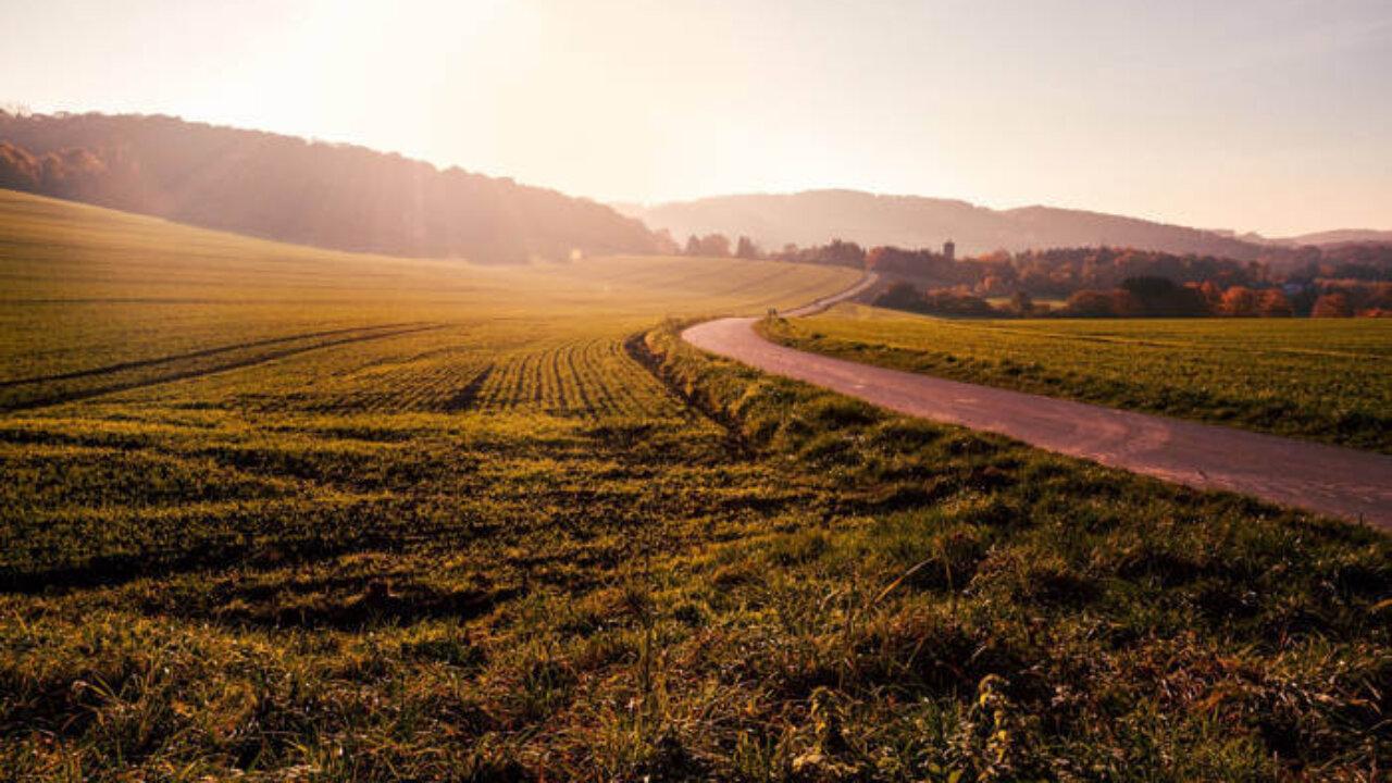 Костромской гектар