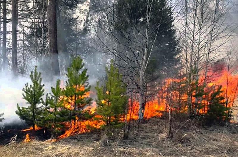 В регионе официально завершен пожароопасный сезон