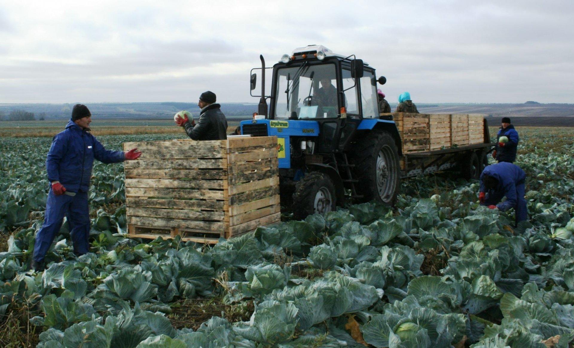 Аграриям региона возместят затраты