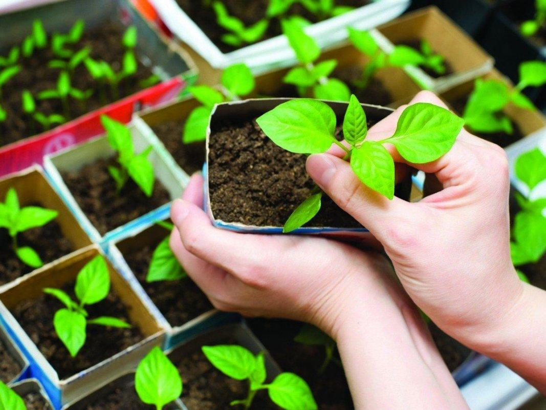 Костромичи могут бесплатно получить земельные участки для выращивания овощей
