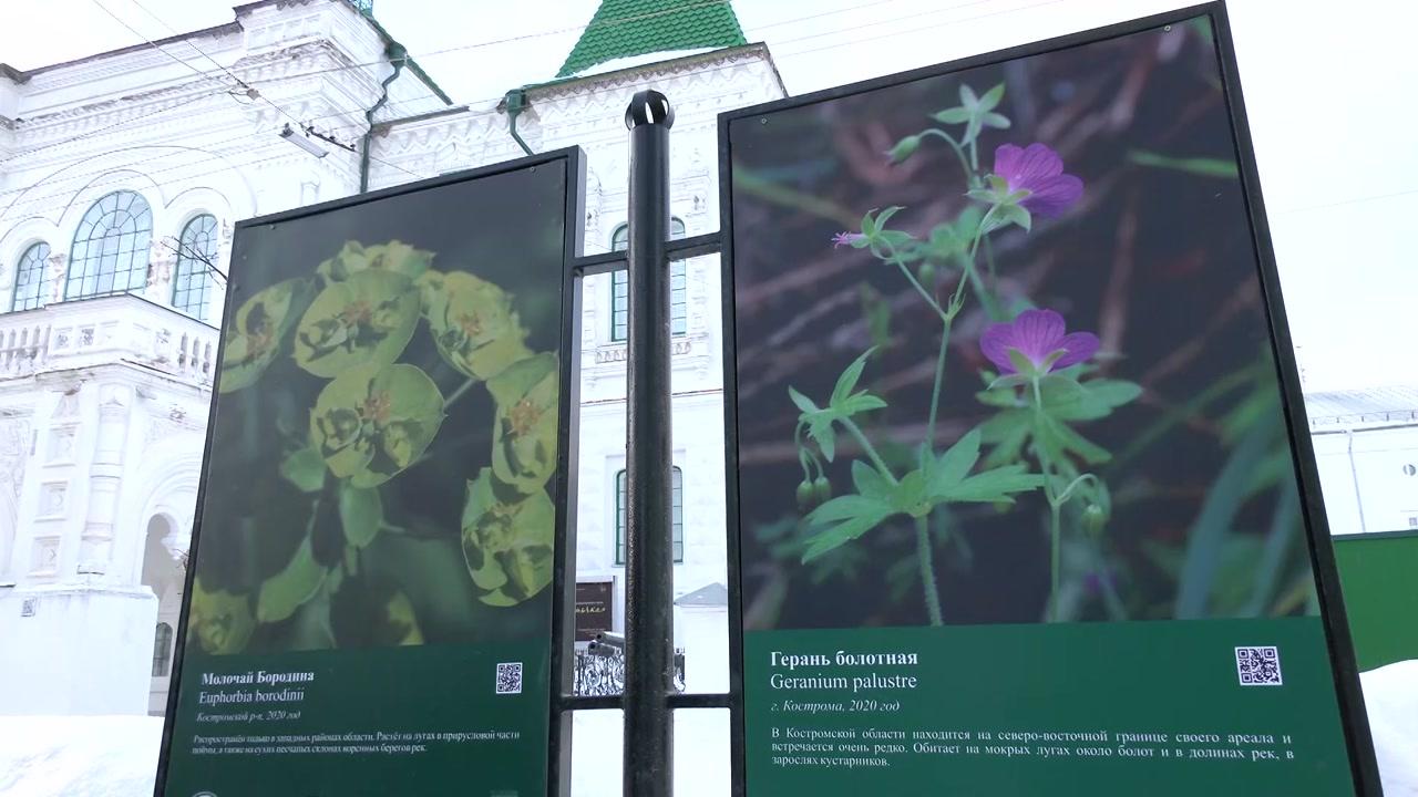 Костромичкам преподнесли «Букет из костромских лесов»