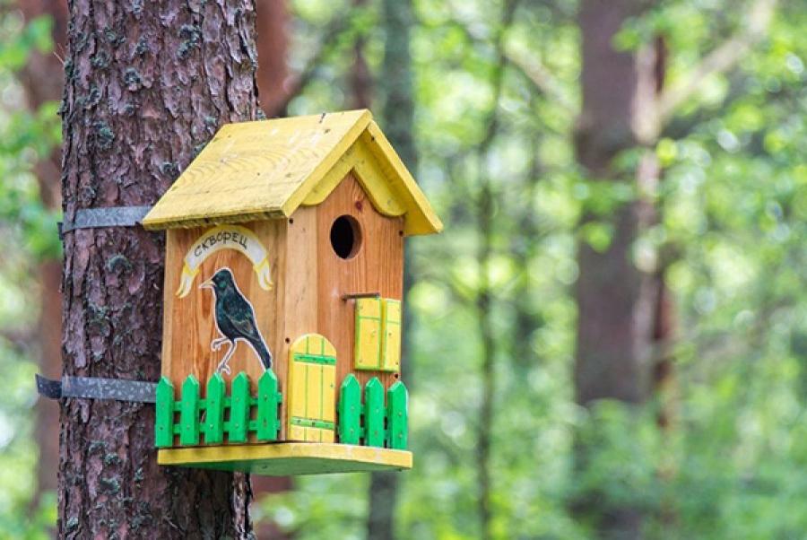 Костромичам предлагают сделать домики для перелетных птиц