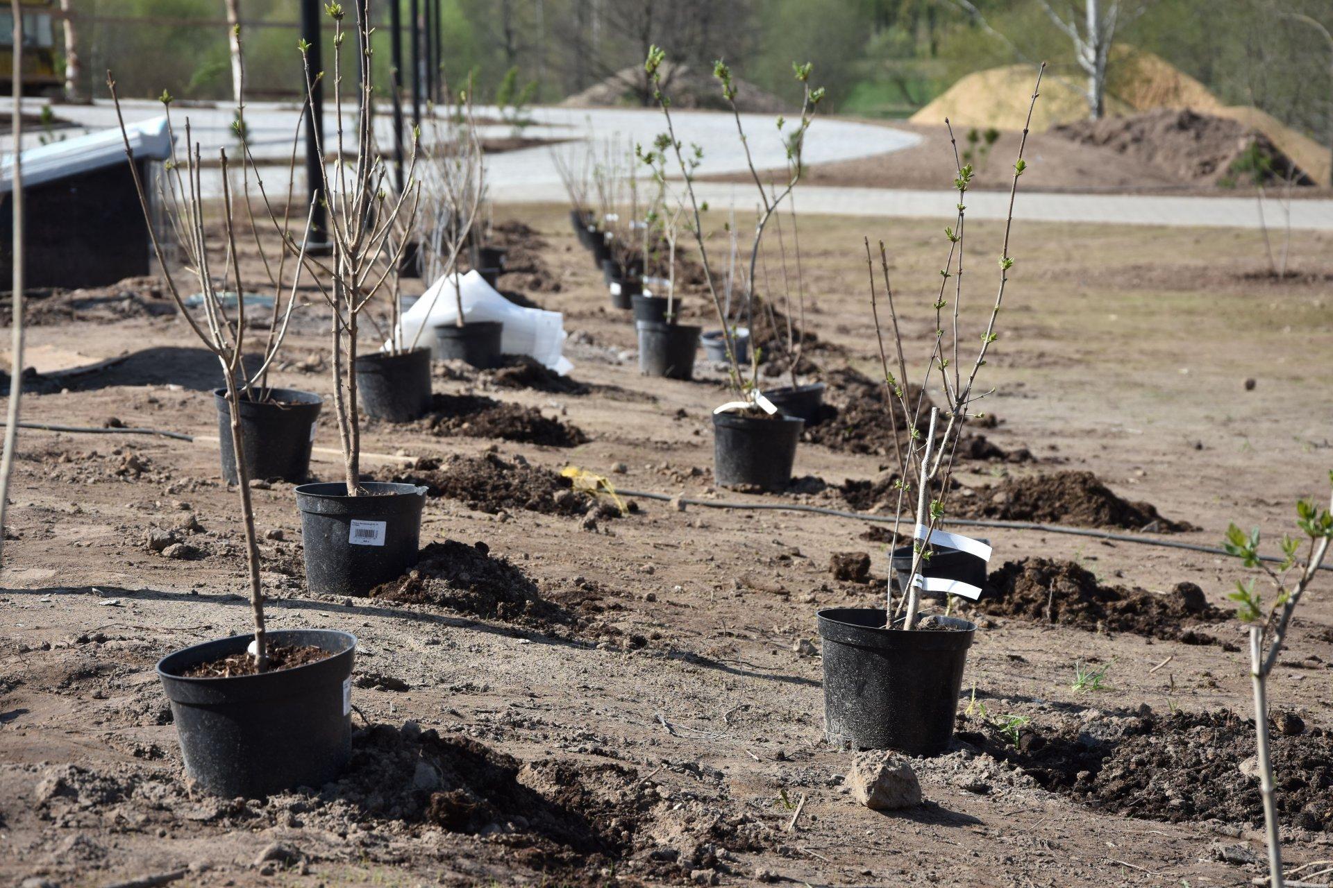 Кострома присоединится к международной акции «Сад памяти»