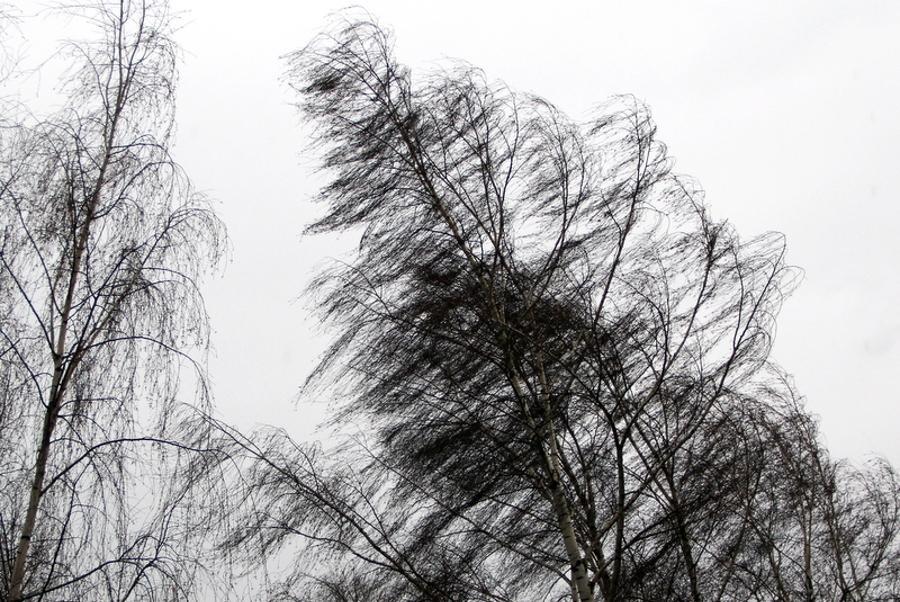 В Костромской области прогнозируют  усиление ветра