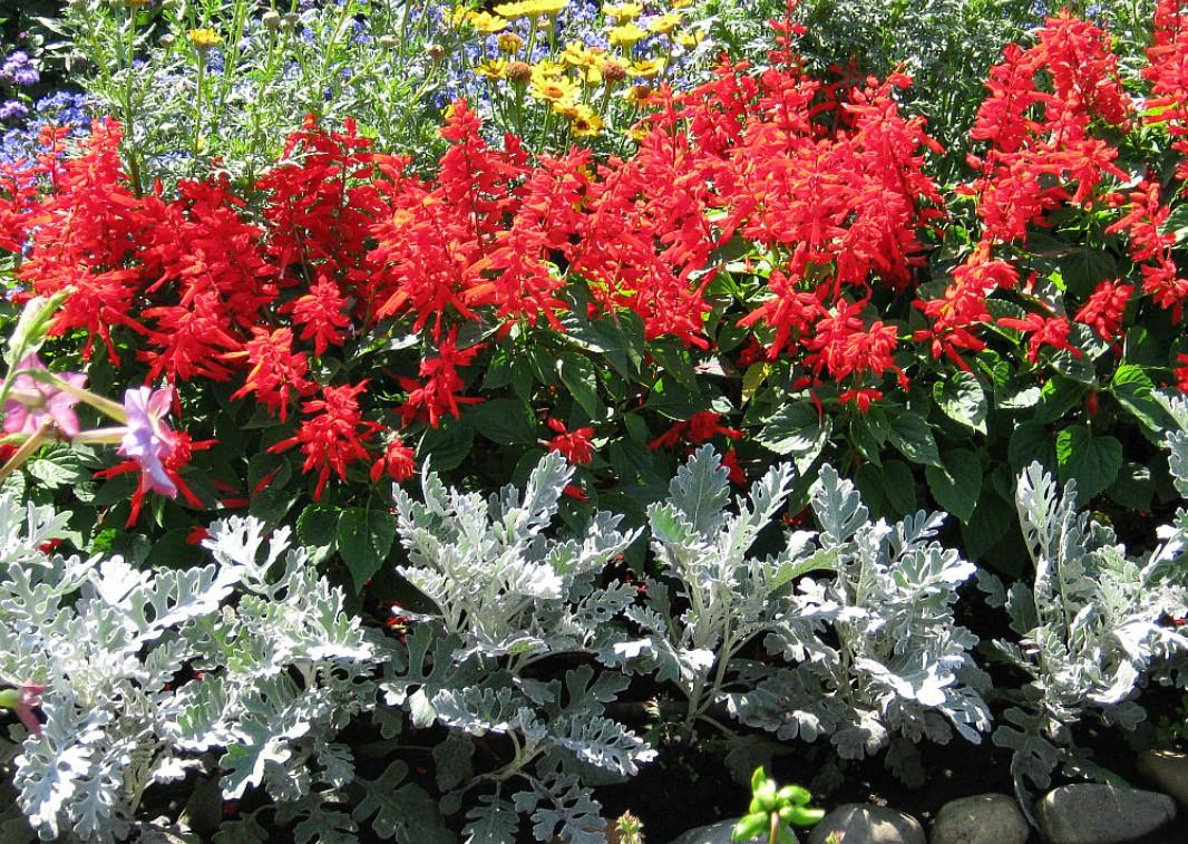 Кострому летом украсят сотни цветов