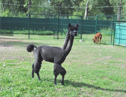 Обитателям костромского зоопарка расширят жилплощадь