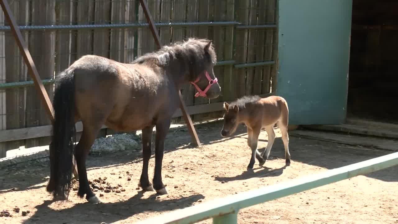 Костромской зоопарк в ожидании большого обновления