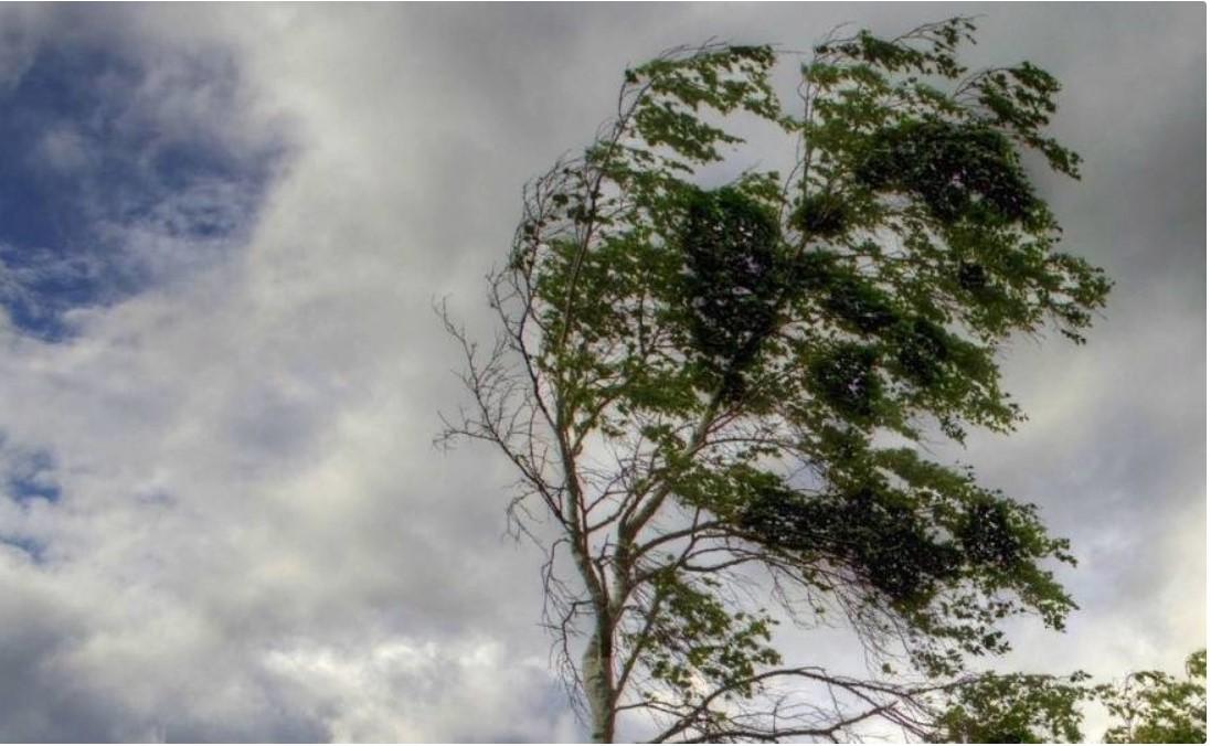 В Костромской области прогнозируется усиление ветра