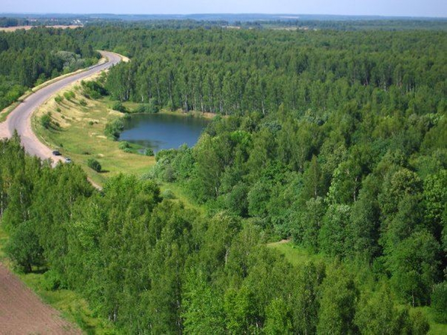 Костромская область перевыполнила план по искусственному лесовосстановлению