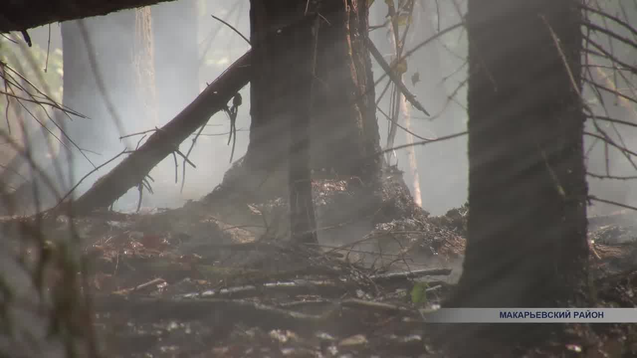 В Макарьевском районе сегодня потушили лесной пожар, с которым боролись 6 дней