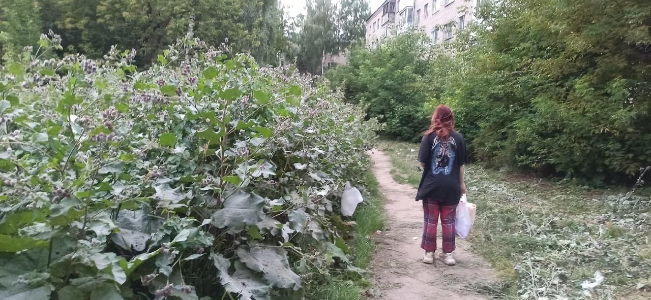 В Костроме под контроль взяли  зеленые территории