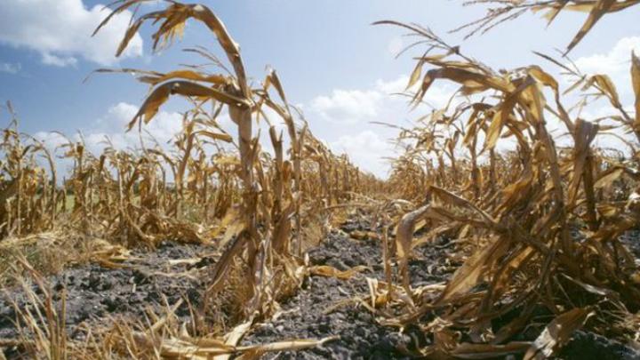Сельхозпредприятия Костромской области несут ущерб из-за засухи
