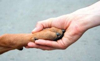 В Костроме стартует благотворительная акция помощи животным