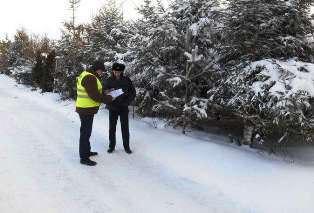 В Костромской области незаконной вырубки леса не выявлено