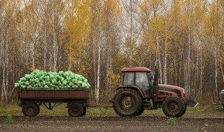 В Костромской области завершилась уборочная