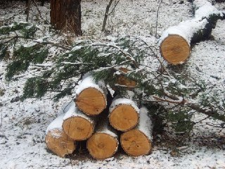 В Костромской области черных лесорубов оштрафовали на 1,5 млн рублей