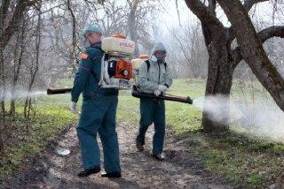 В Костроме опять опрыскали деревья от клещей