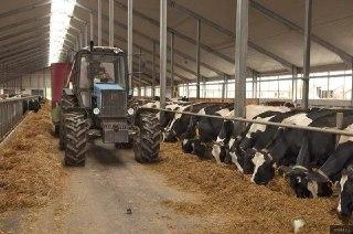 Фермер из Островского района выиграл государственный грант на строительство молочной фермы