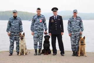 Костромские кинологи привезли награды с всероссийского чемпионата
