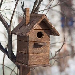 В Костромской области Межевское школьное лесничество объявило весеннюю акцию для птиц