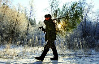 В Костромских лесах охотников за ёлками будут ждать полицейские
