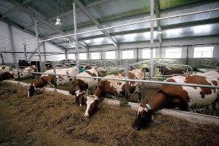 В деревне Захарово Красносельского района началось строительство животноводческого комплекса