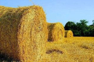 В Костромской области завершена заготовка кормов